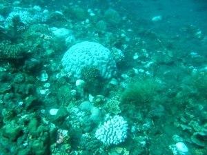 Coral Bleaching by YRCI