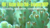klik gambar ini untuk melihat website MDC